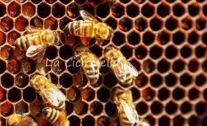 Api e miele Agricoltura Bio